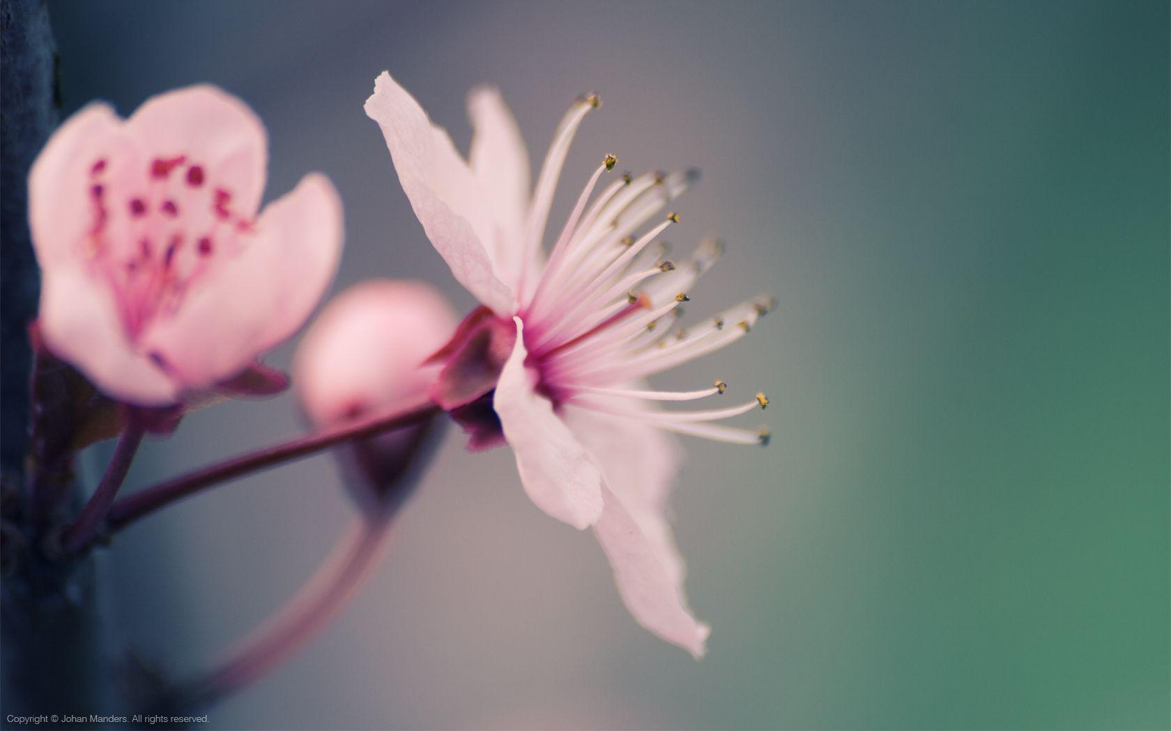 Spring Flowers Background