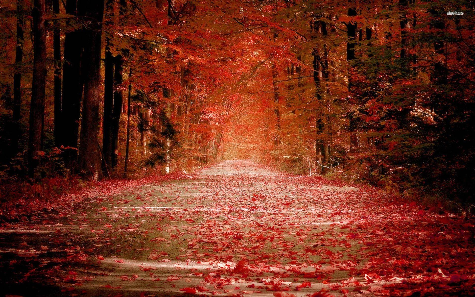 red fall wallpaper - photo #15