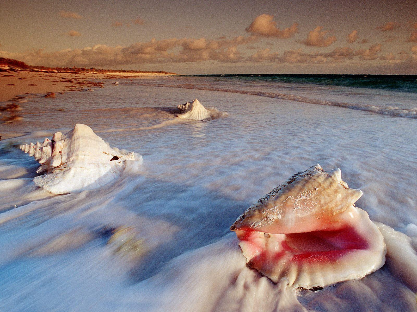 Sea Shell Wallpapers