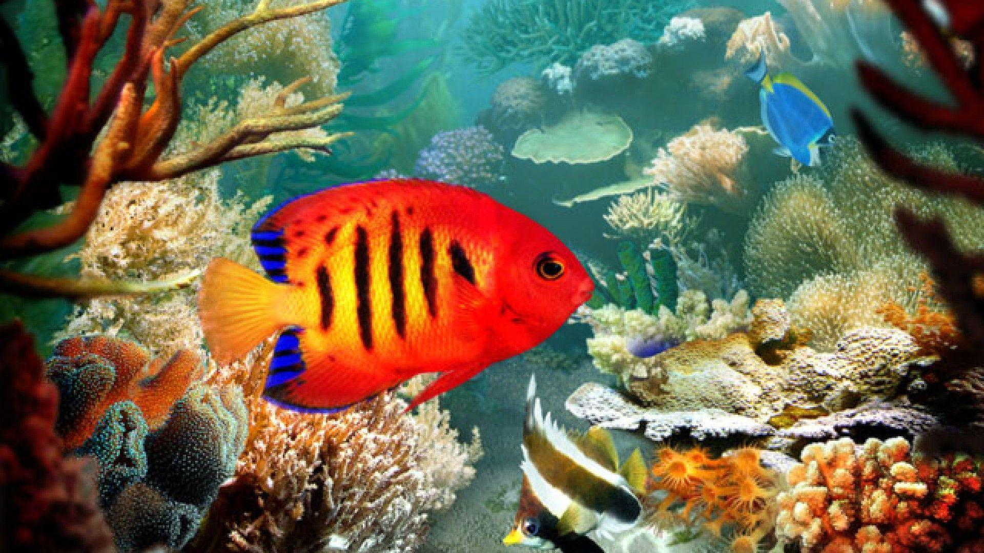 Tropical Fish 3D wallpapers