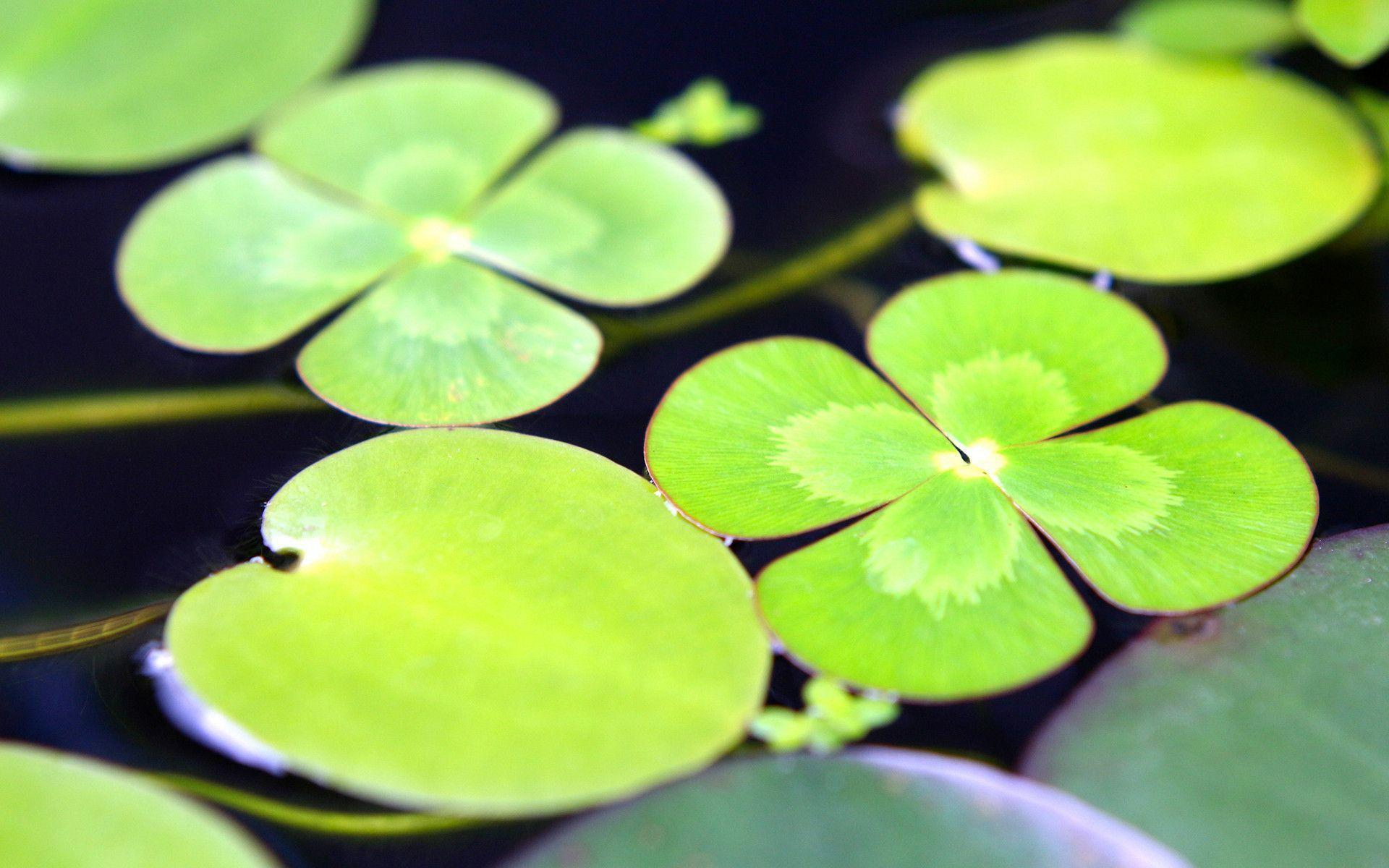 lily pad wallpapers wallpaper cave
