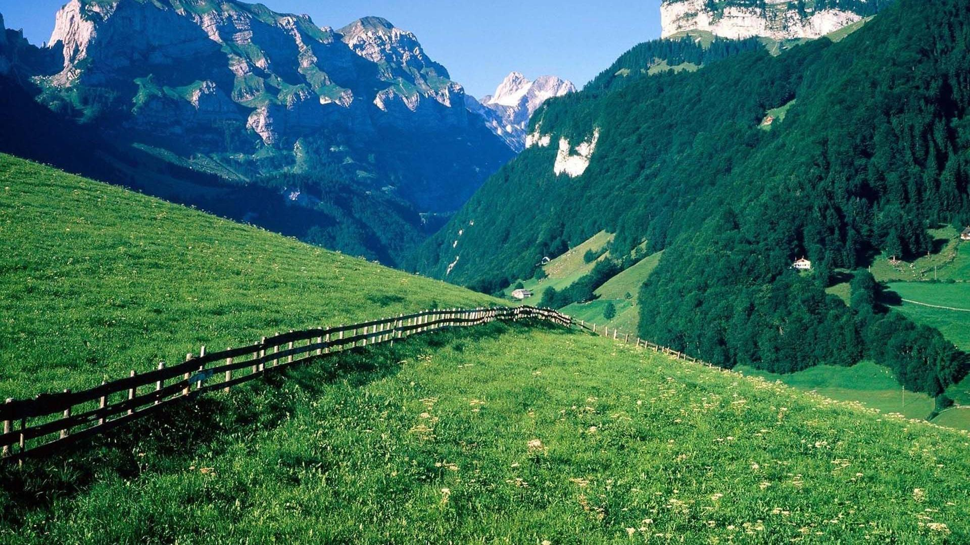 HD Wonderful Swiss Alps Meadow Wallpaper | Download Free - 62216