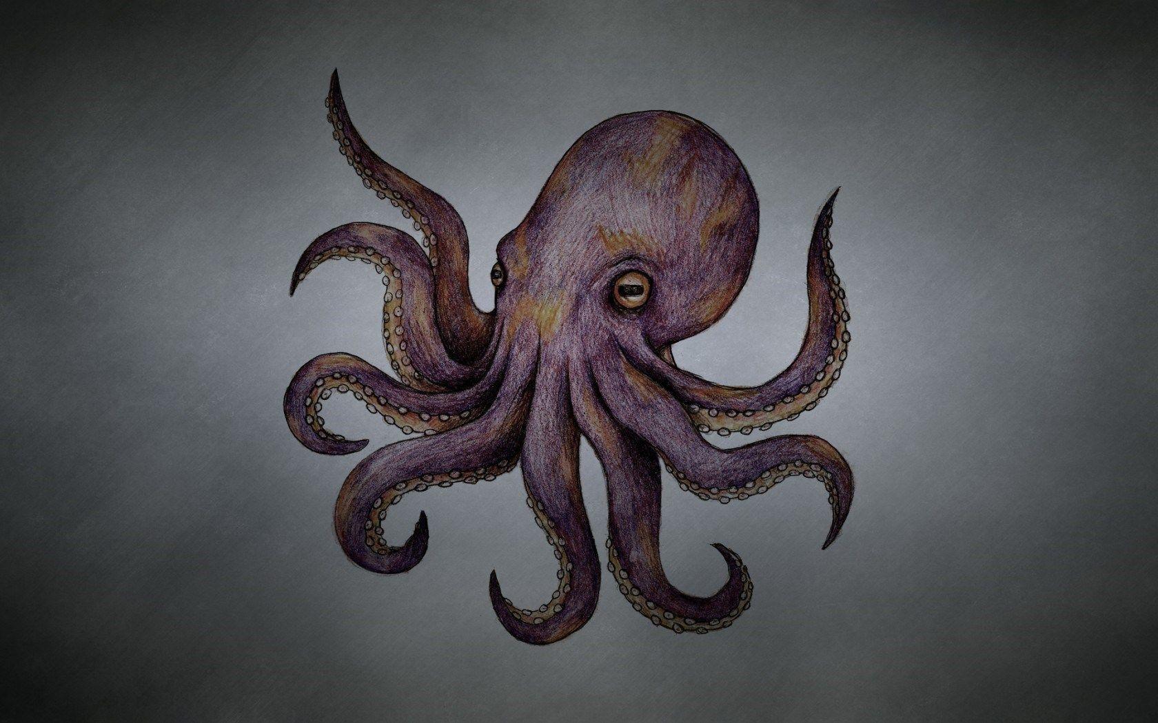 Octopus art wallpaper