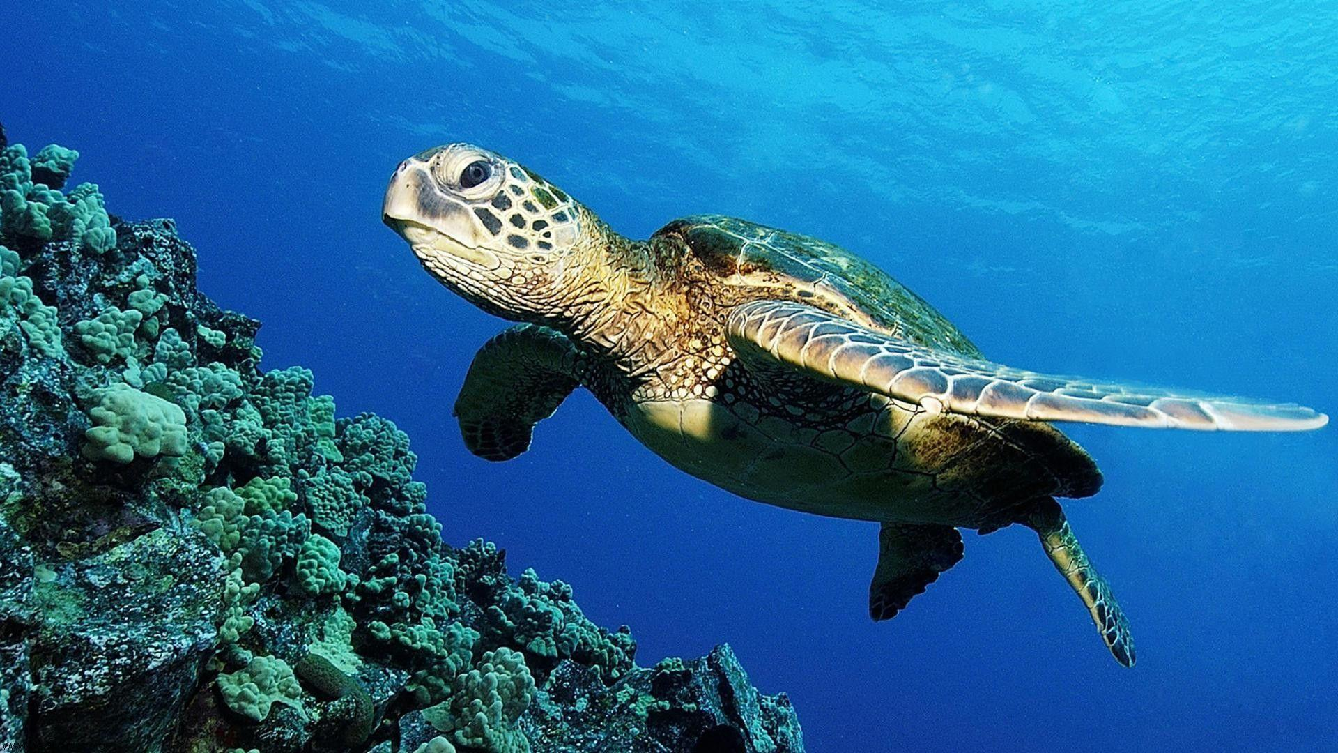 Wallpapers For > Sea Turtle Beach Wallpapers