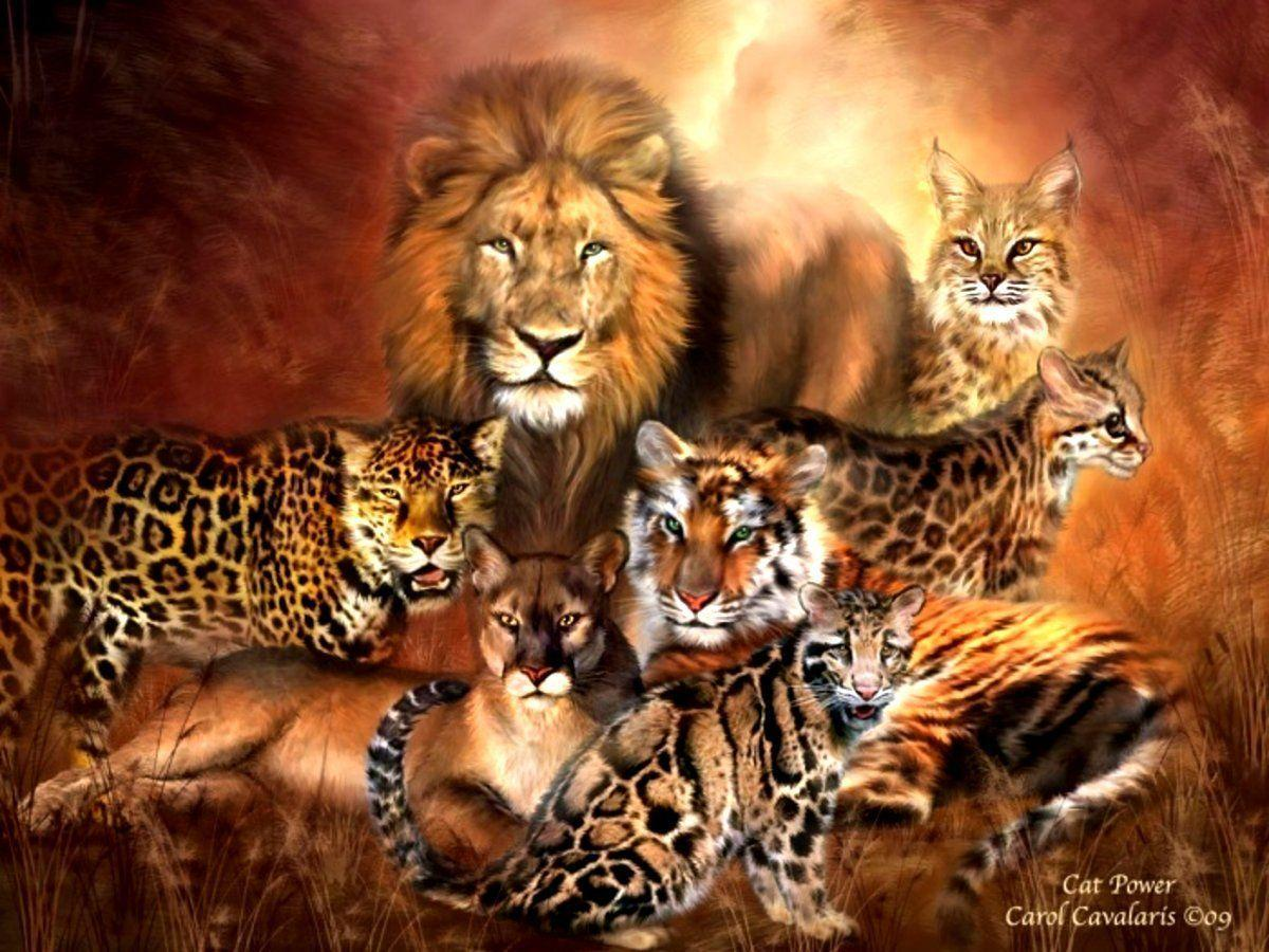 Big Cats Wallpapers - Wallpaper Cave