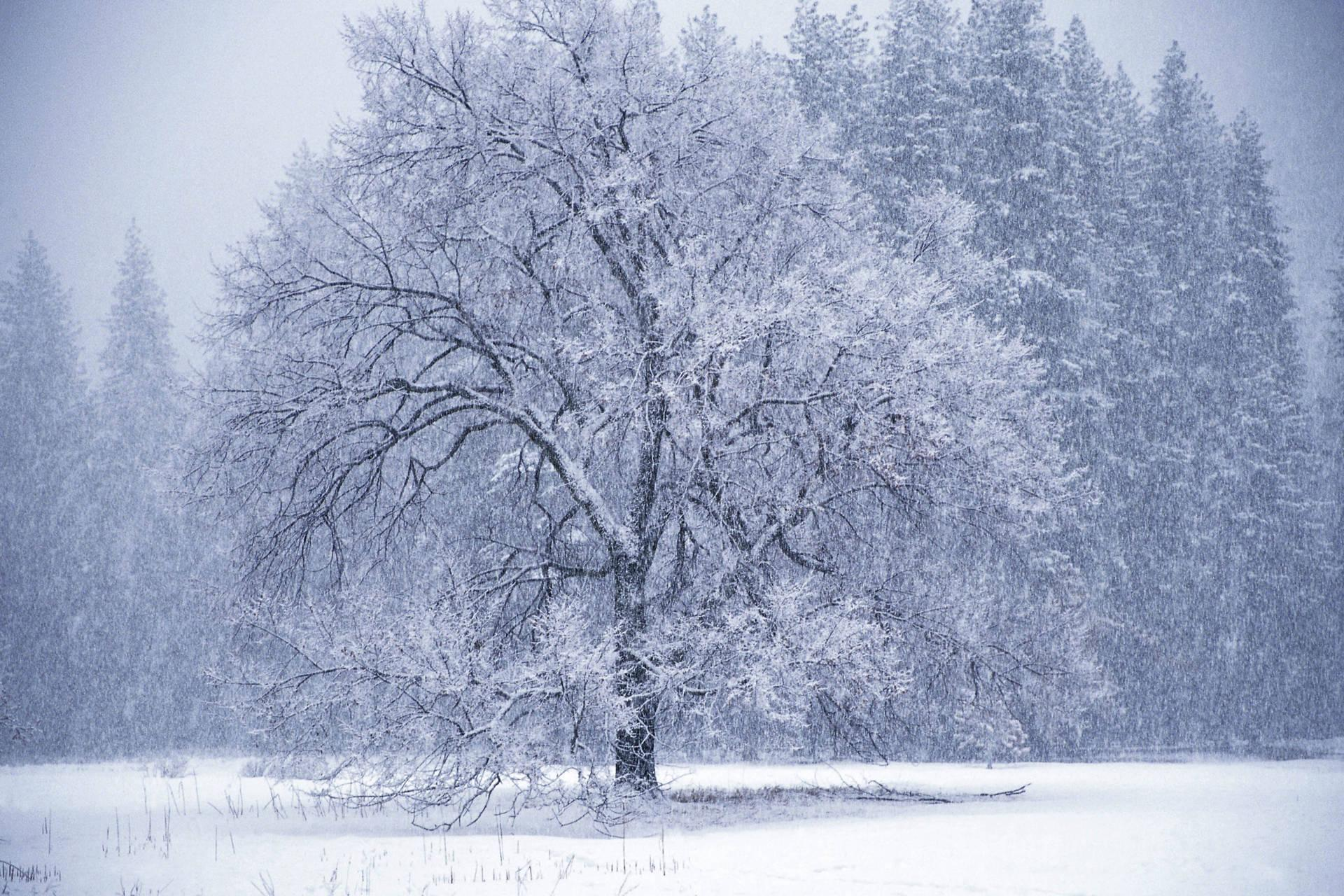 Winter tree snow storm Wallpaper 1444369814