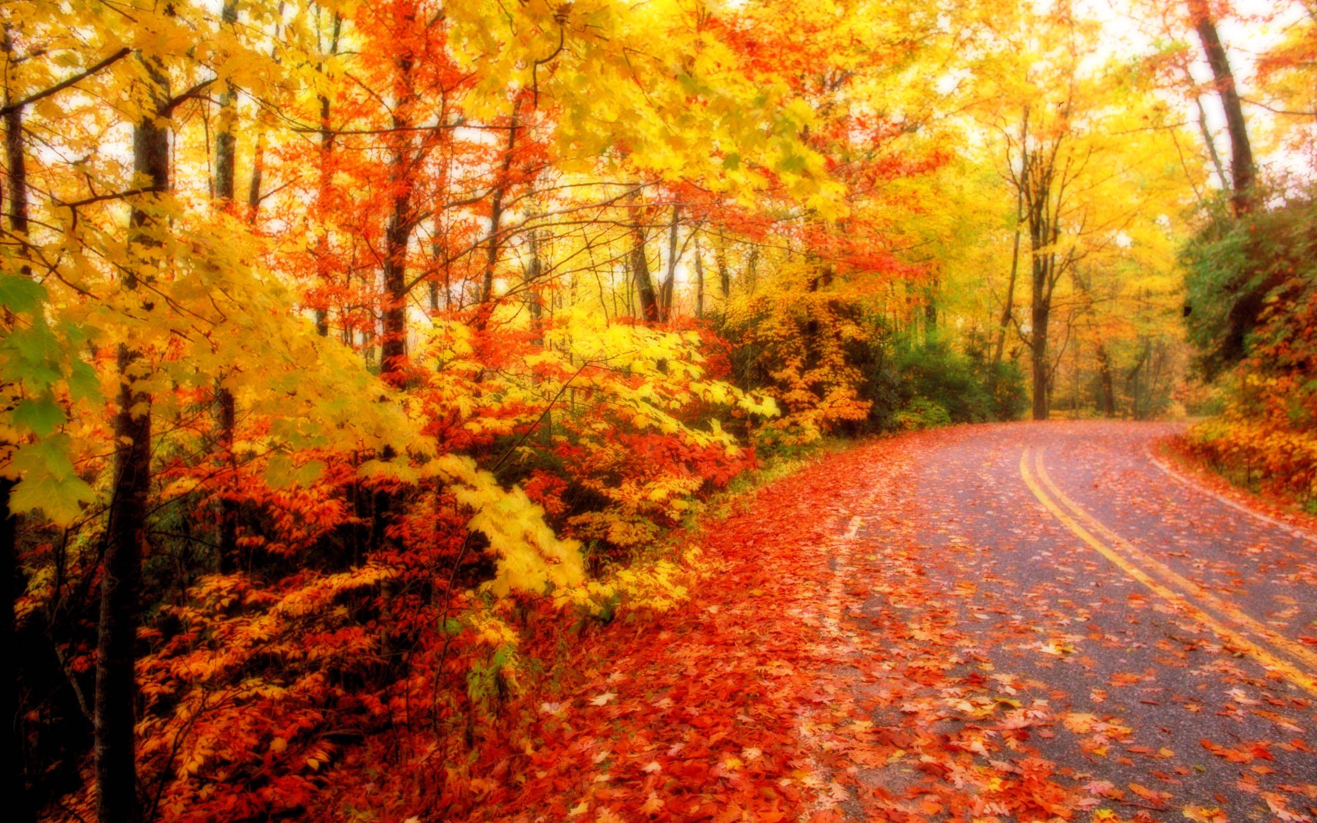 HD Autumn Leaves HD Wallpapers / Wallpapers Database