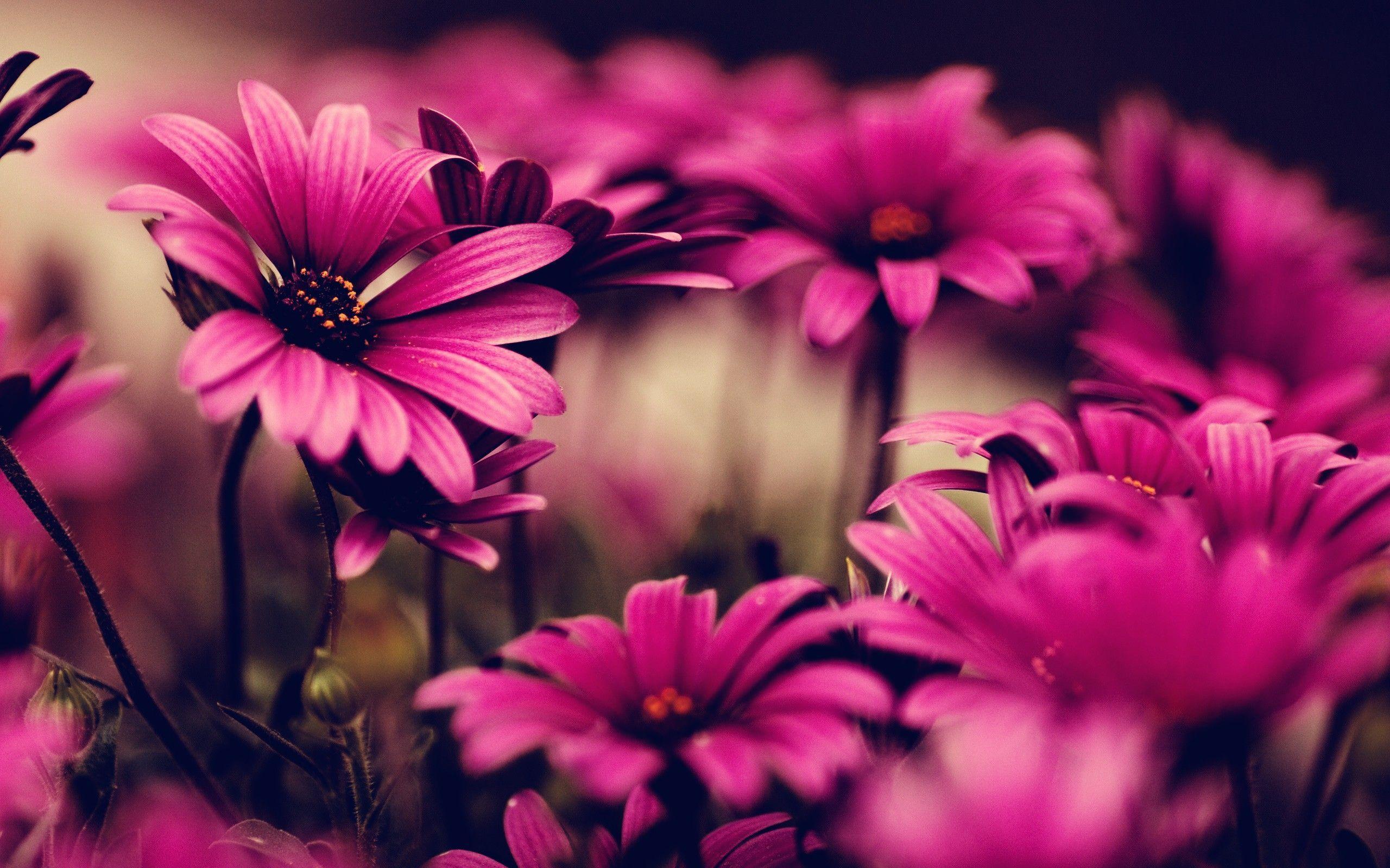 Pink Floral Desktop Wallpaper