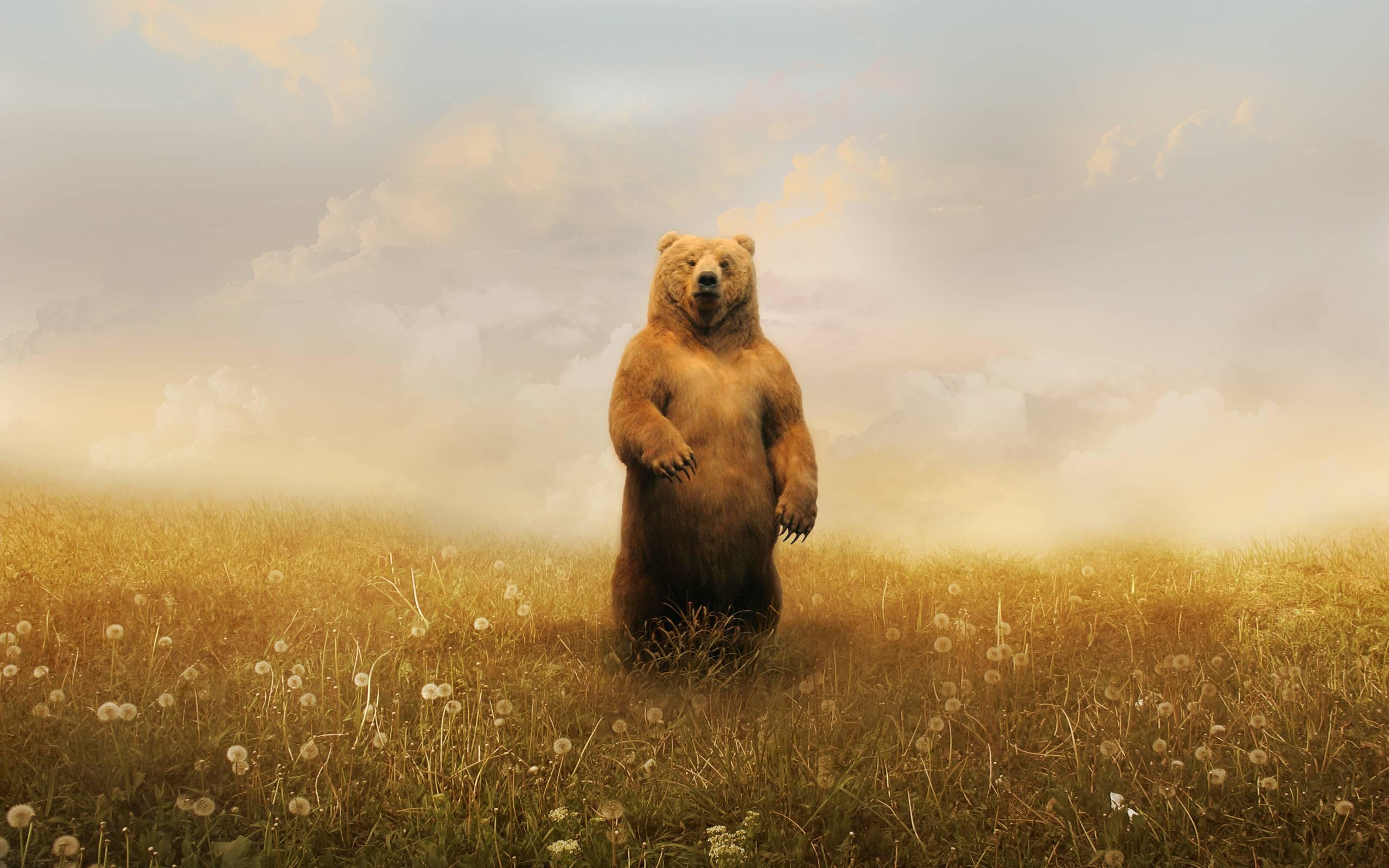 Bear Art Wallpaper - Viewing Gallery