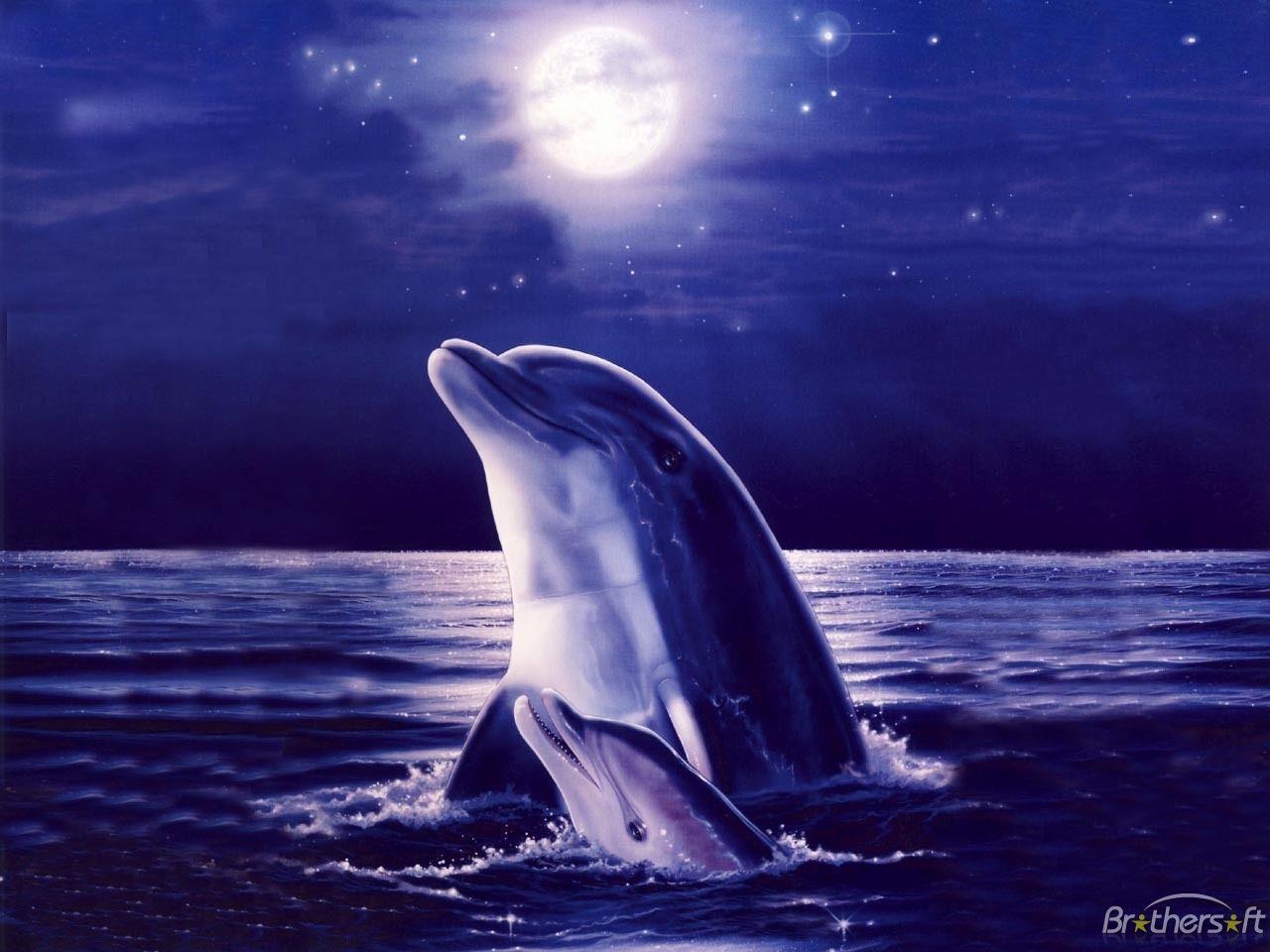 3D Dolphin Wallpaper - www.