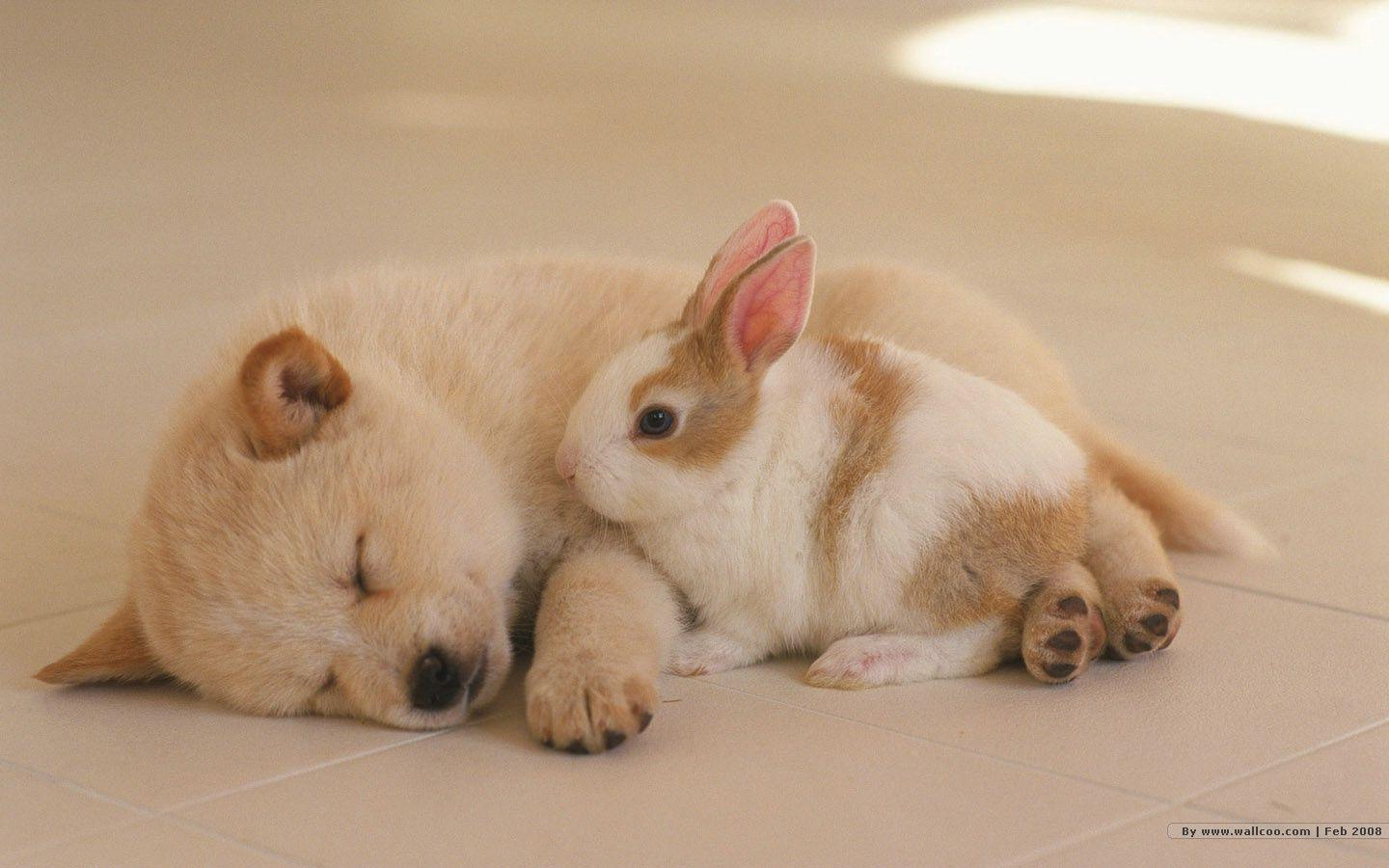 1440*900 Lovely Puppy wallpapers / Lovely Puppies Photos 1440x900 ...