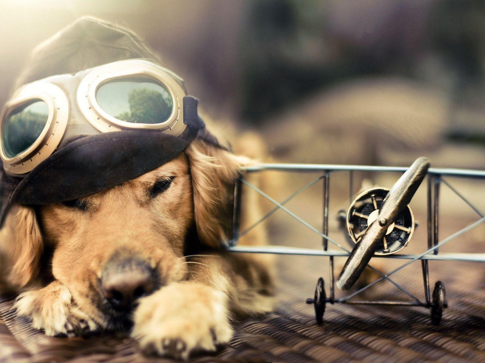 funny dog wallpapers wallpaper cave