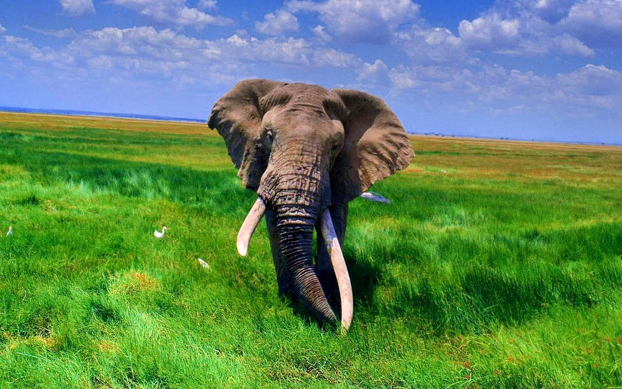 Image result for african elephant wallpaper