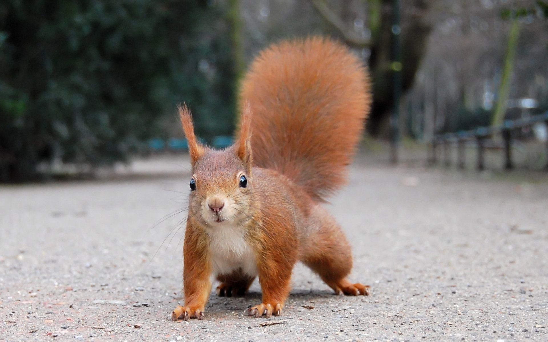 Funny Squirrel Wallpaper 39782 in Animals - Telusers.