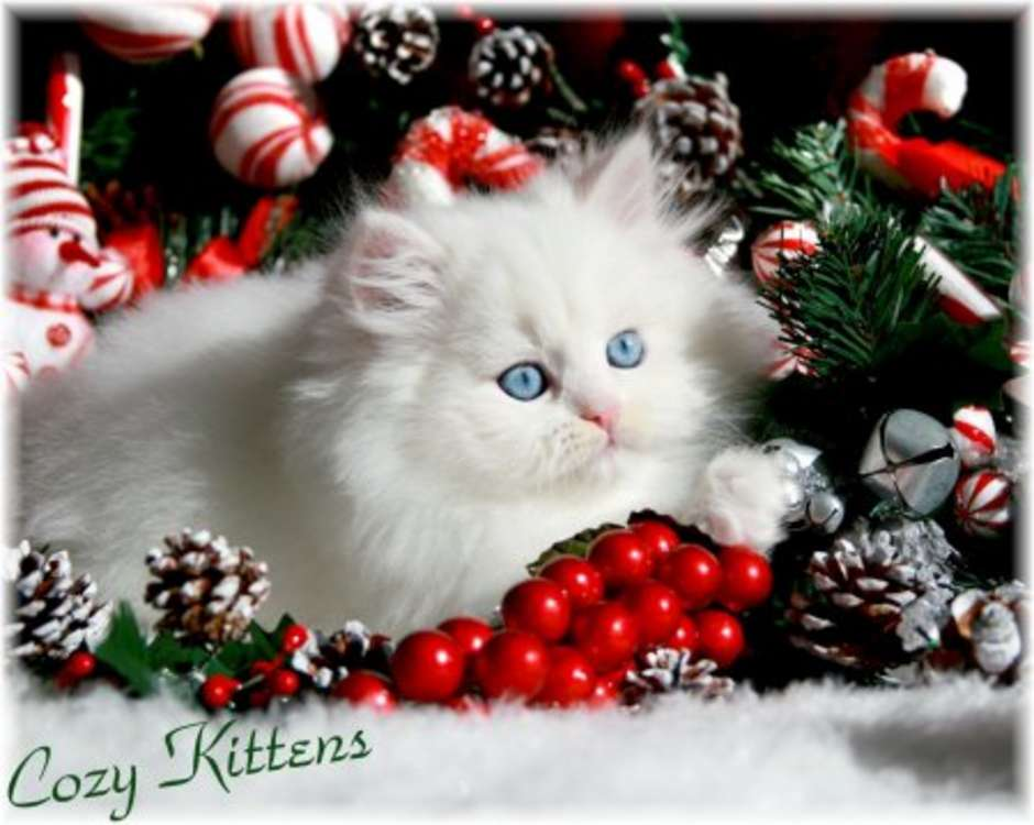 Cute Christmas Kitten Wallpapers | Free Christian Wallpapers