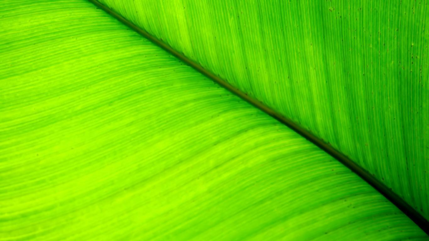 light green leaves background - photo #33