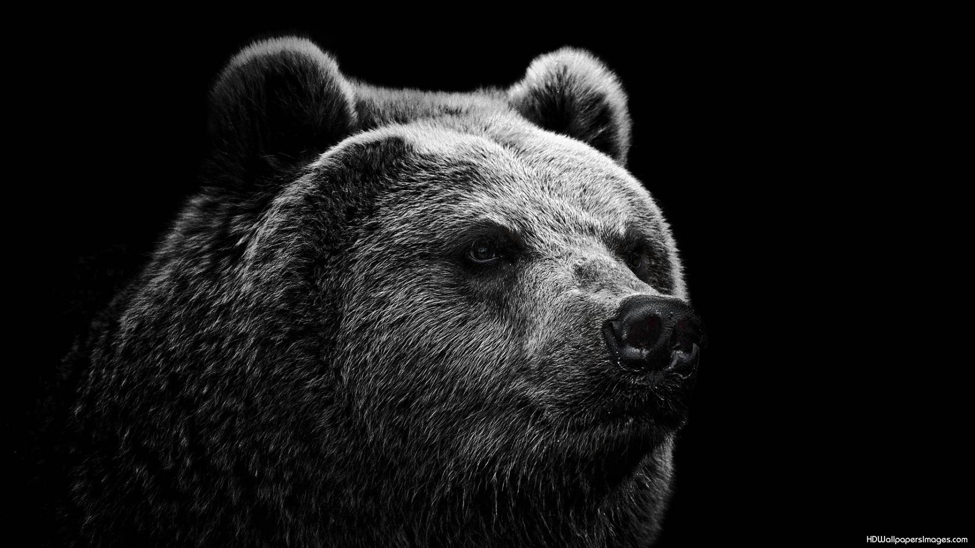 Black And White Bear : Free black bear wallpapers wallpaper cave