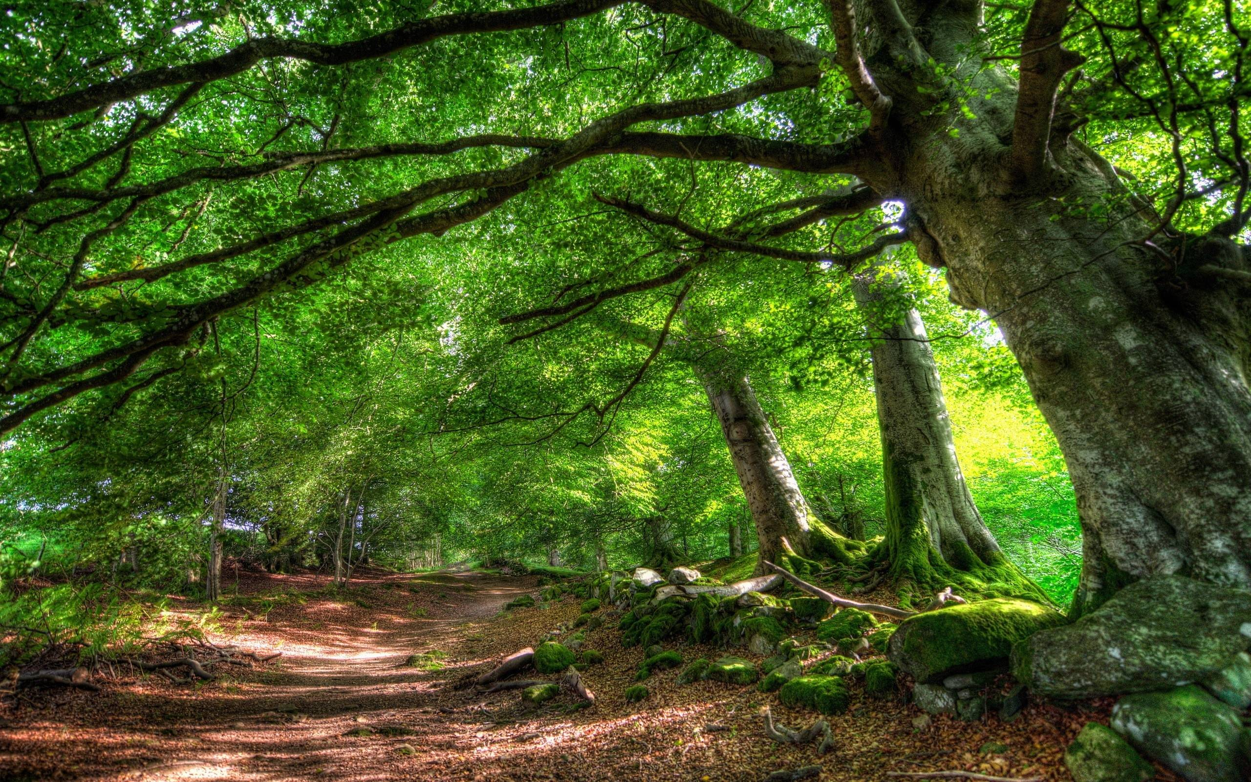 forest trail of green trees hd desktop wallpaper hd desktop