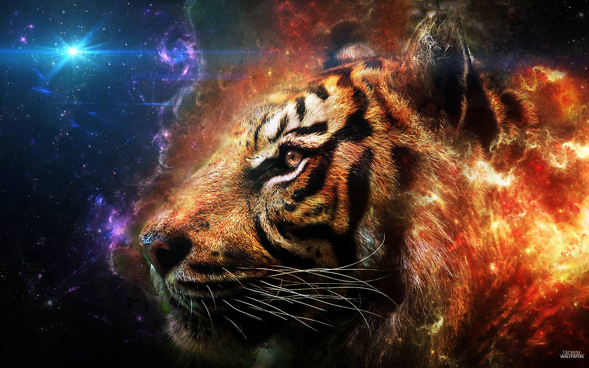 Fantasy Tiger Hd Desktop Wallpapers Widescreen High: Tiger Backgrounds Pictures