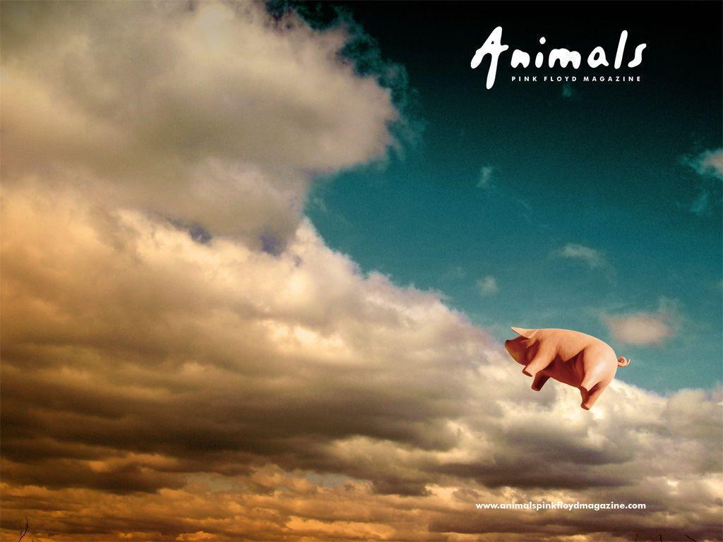 Pink floyd animals - Images For Pink Floyd Animals Wallpaper
