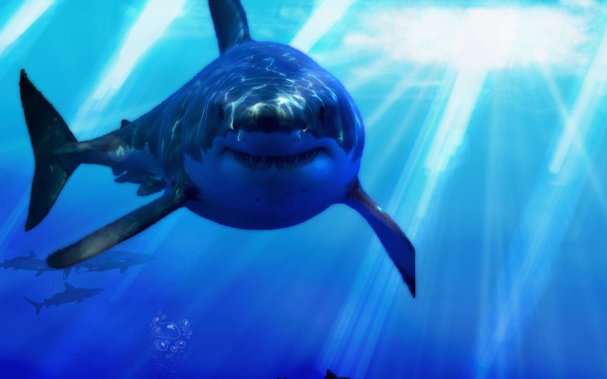 Great White Shark Wallpapers Best Great White Shark Wallpapers in
