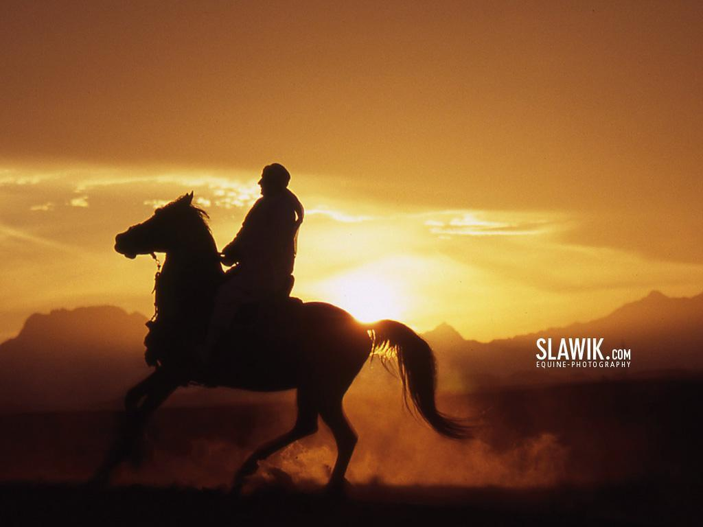 Slawik horse wallpapers - Horses Wallpaper (6070992) - Fanpop