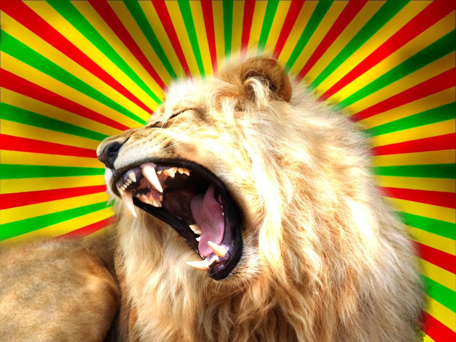 rastafarian lion wallpaper - photo #21