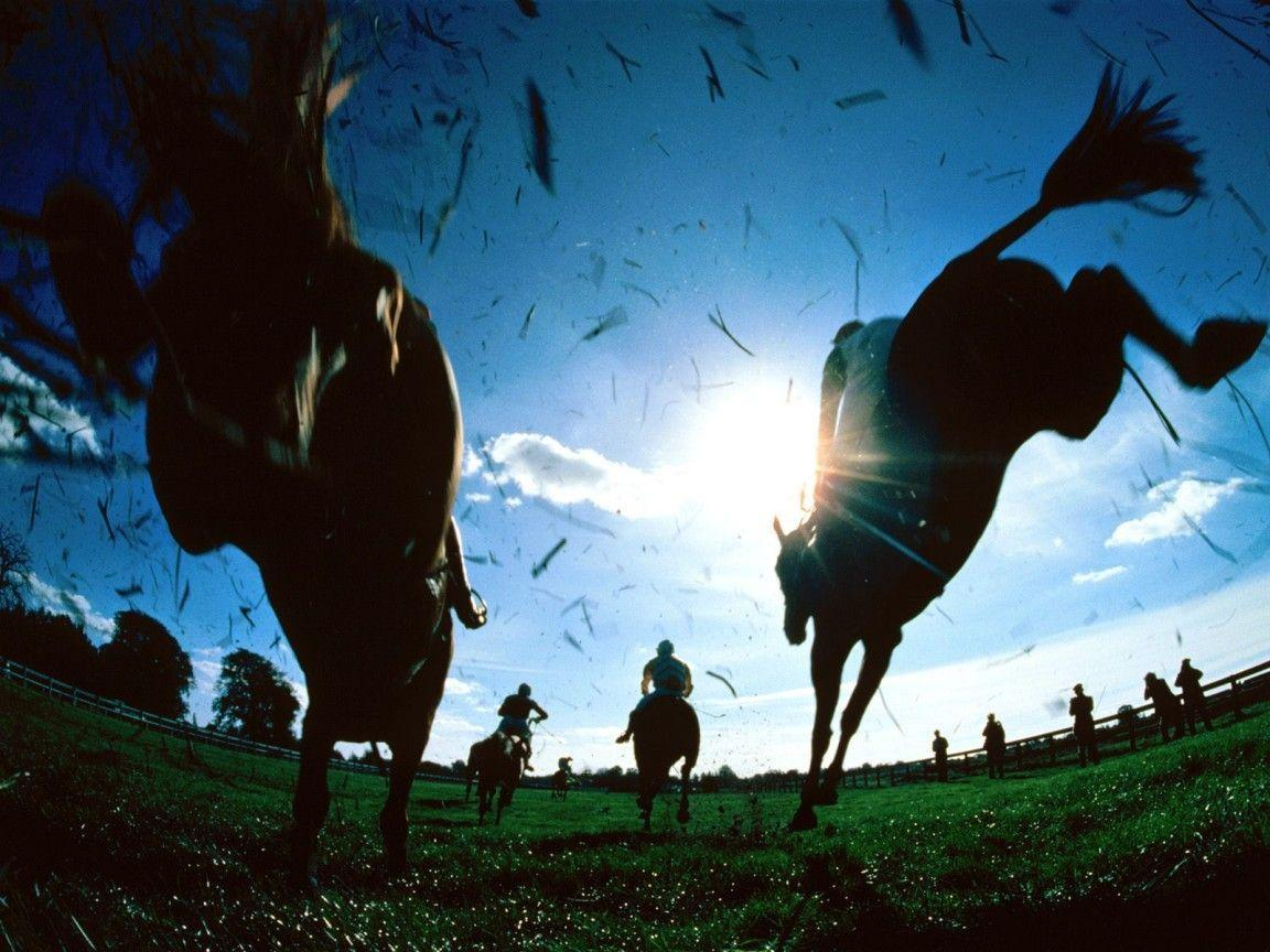 free horse screensavers and - photo #17