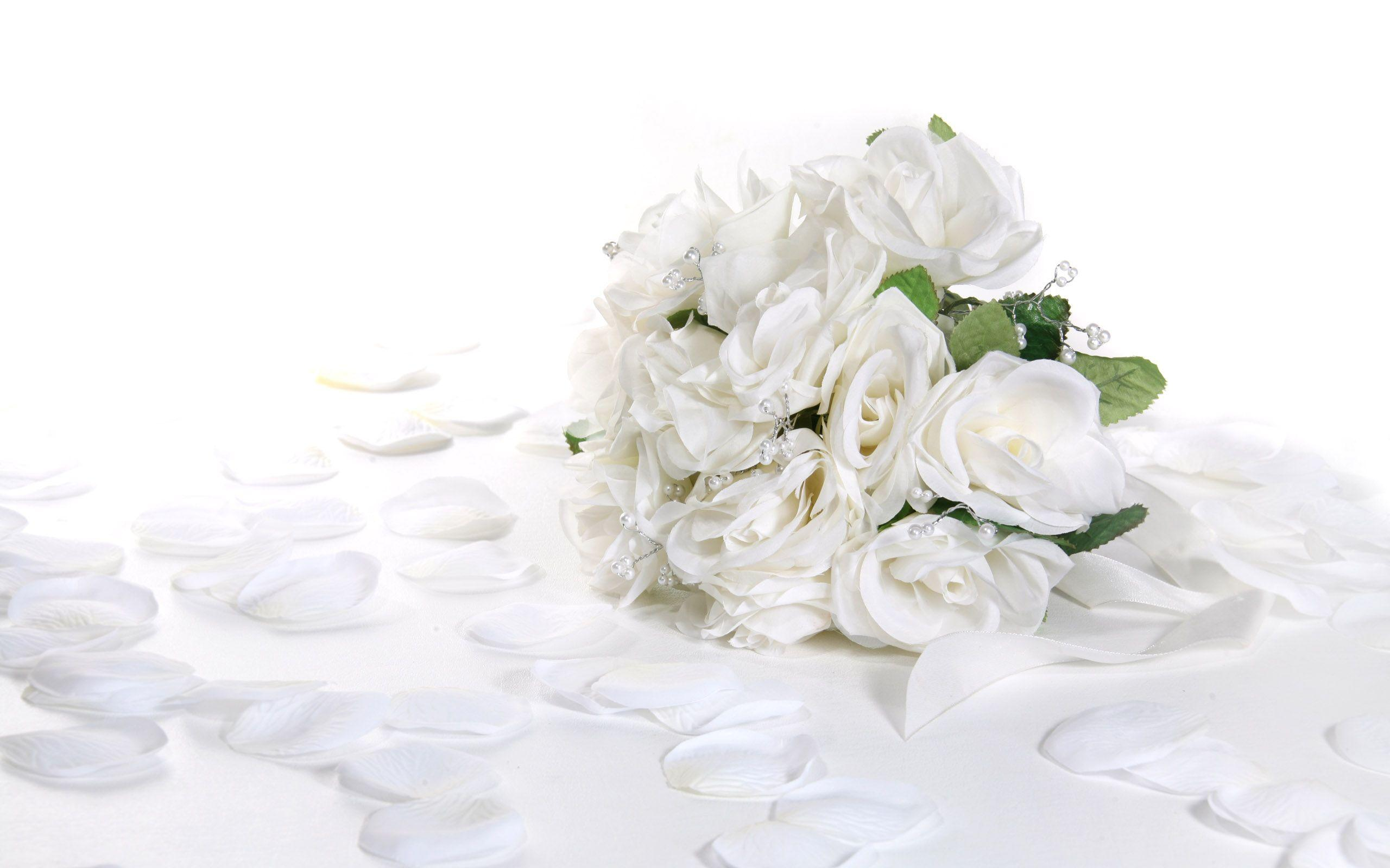 bloomed white roses wallpaper-#9