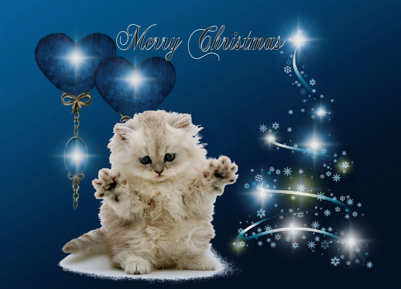 Kitten Christmas - Kittens Photo (18476926) - Fanpop
