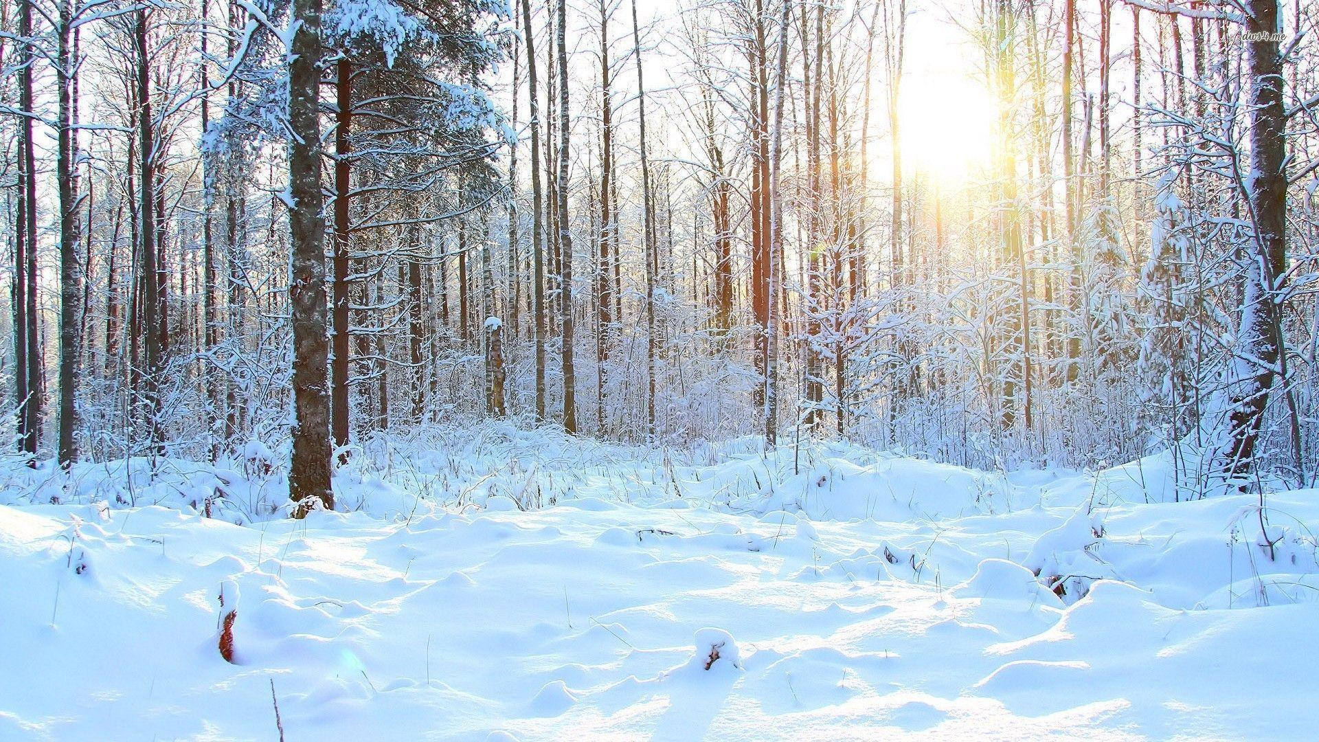 snowy forest wallpapers wallpaper cave