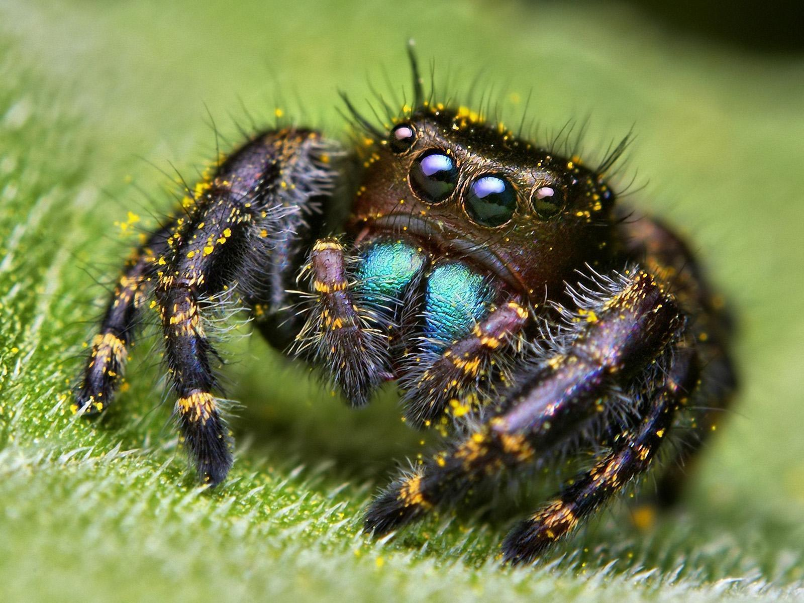 Spider HD wallpapers
