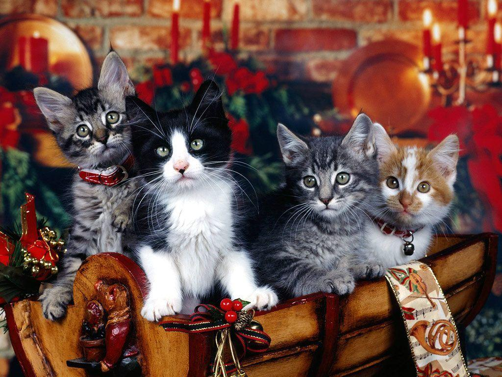 Christmas Kittens in Basket | Photo and Desktop Wallpaper