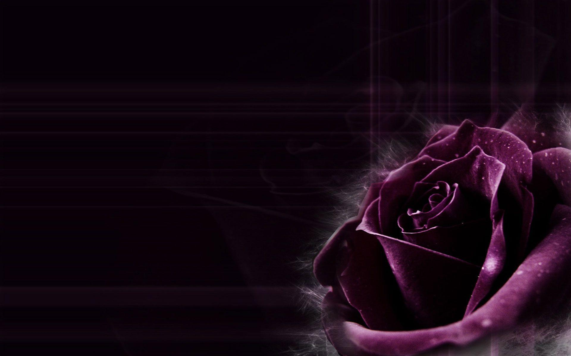 Dark Purple Background...