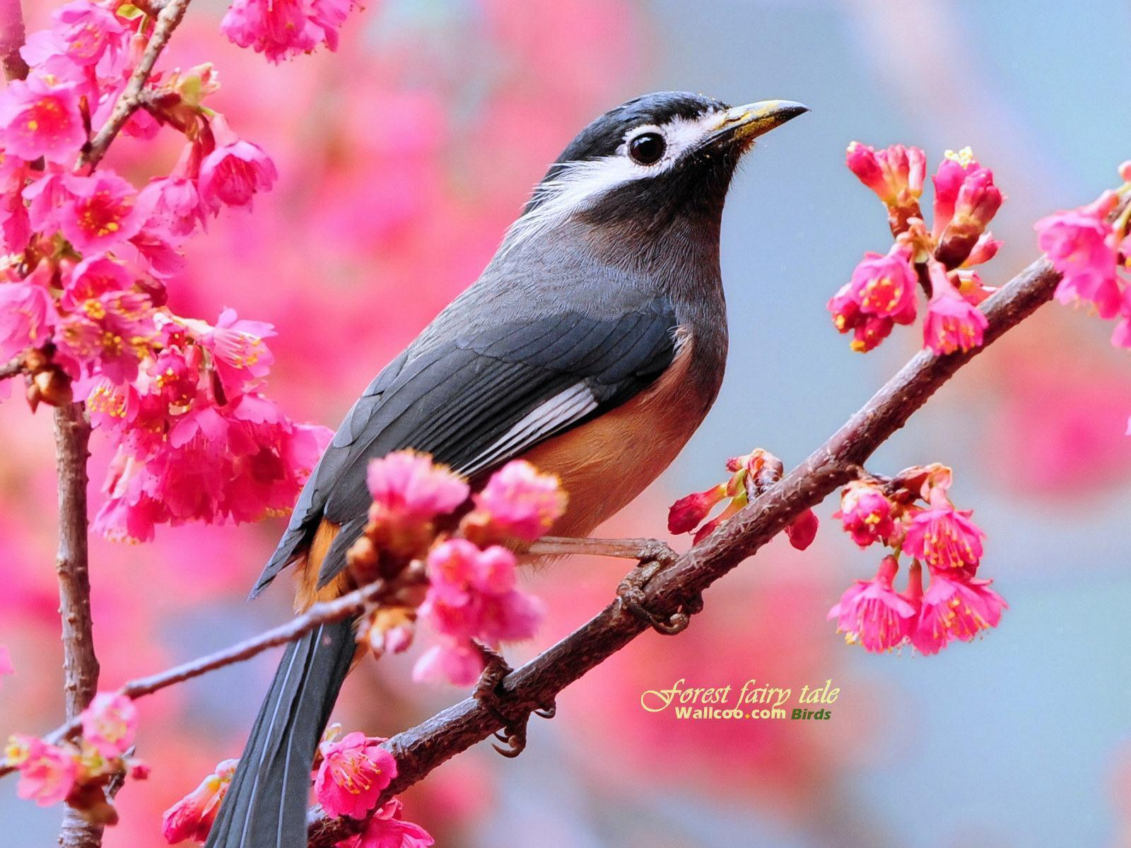Wallpaper download free image search - Cute Birds Wallpapers Download Free Cute Birds Desktop Laptop