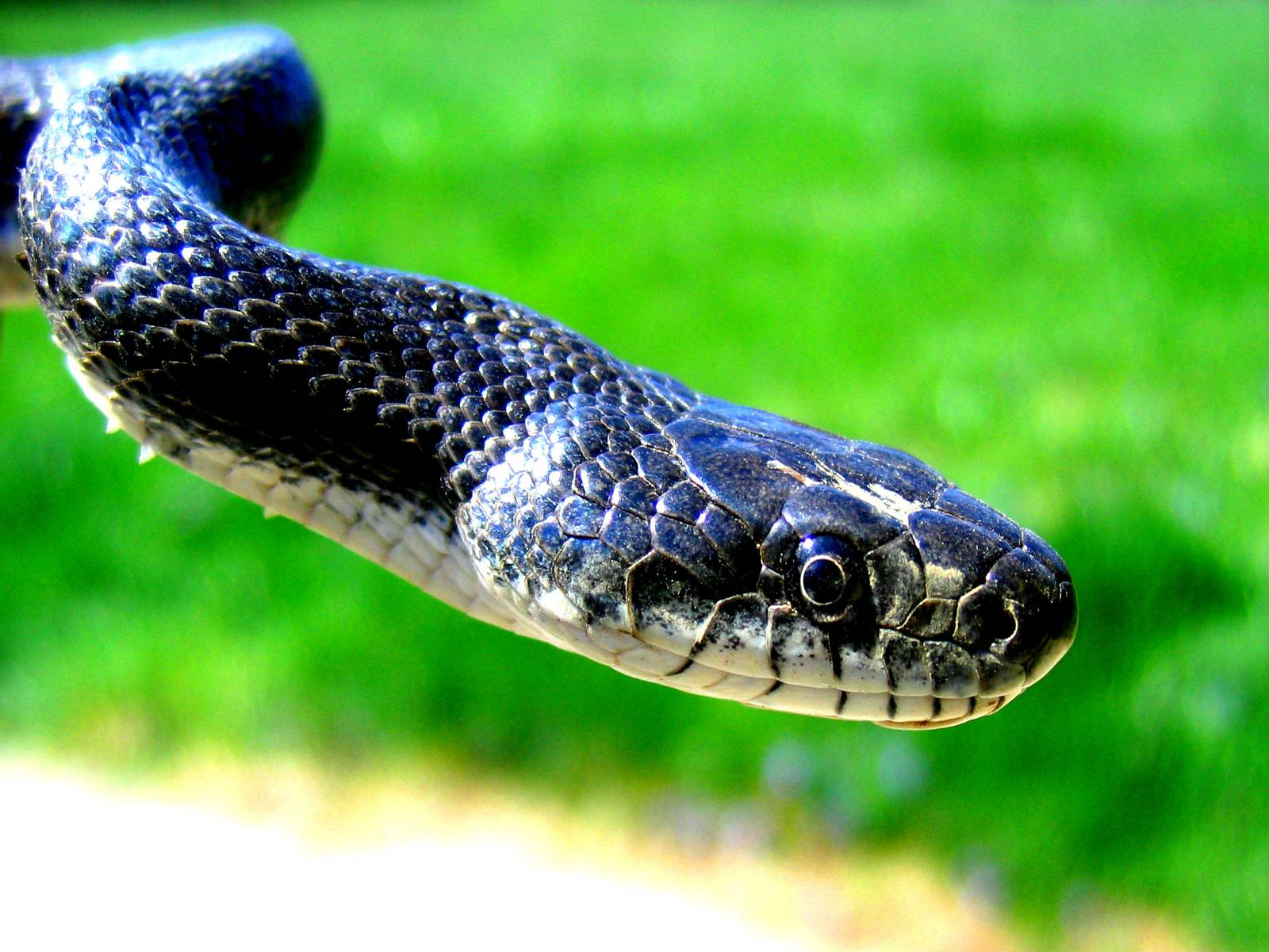 Top Most Wonderful Snake Wallpapers In HD × Snake Image