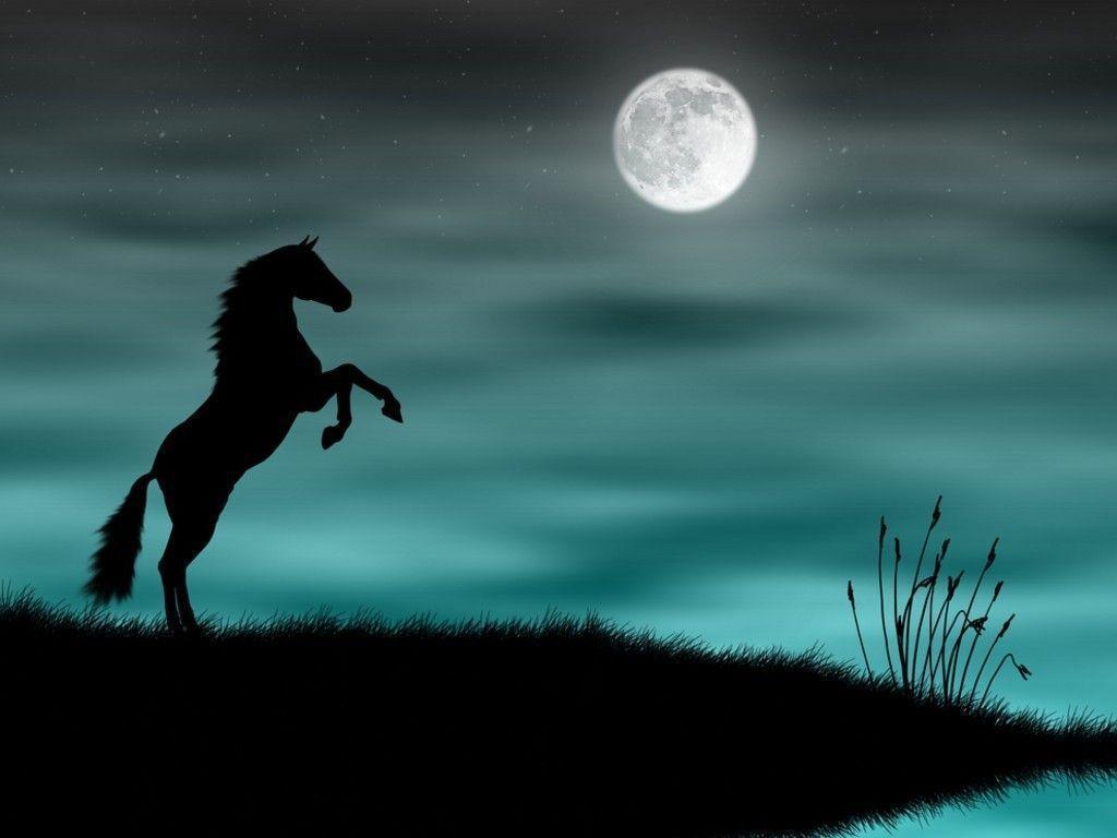 Cool Horse Backgrounds Wallpaper