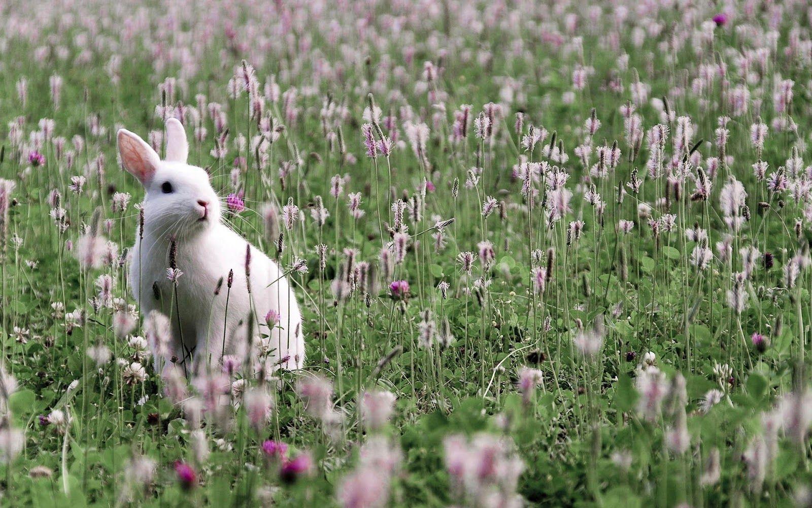 White Rabbit Wallpapers