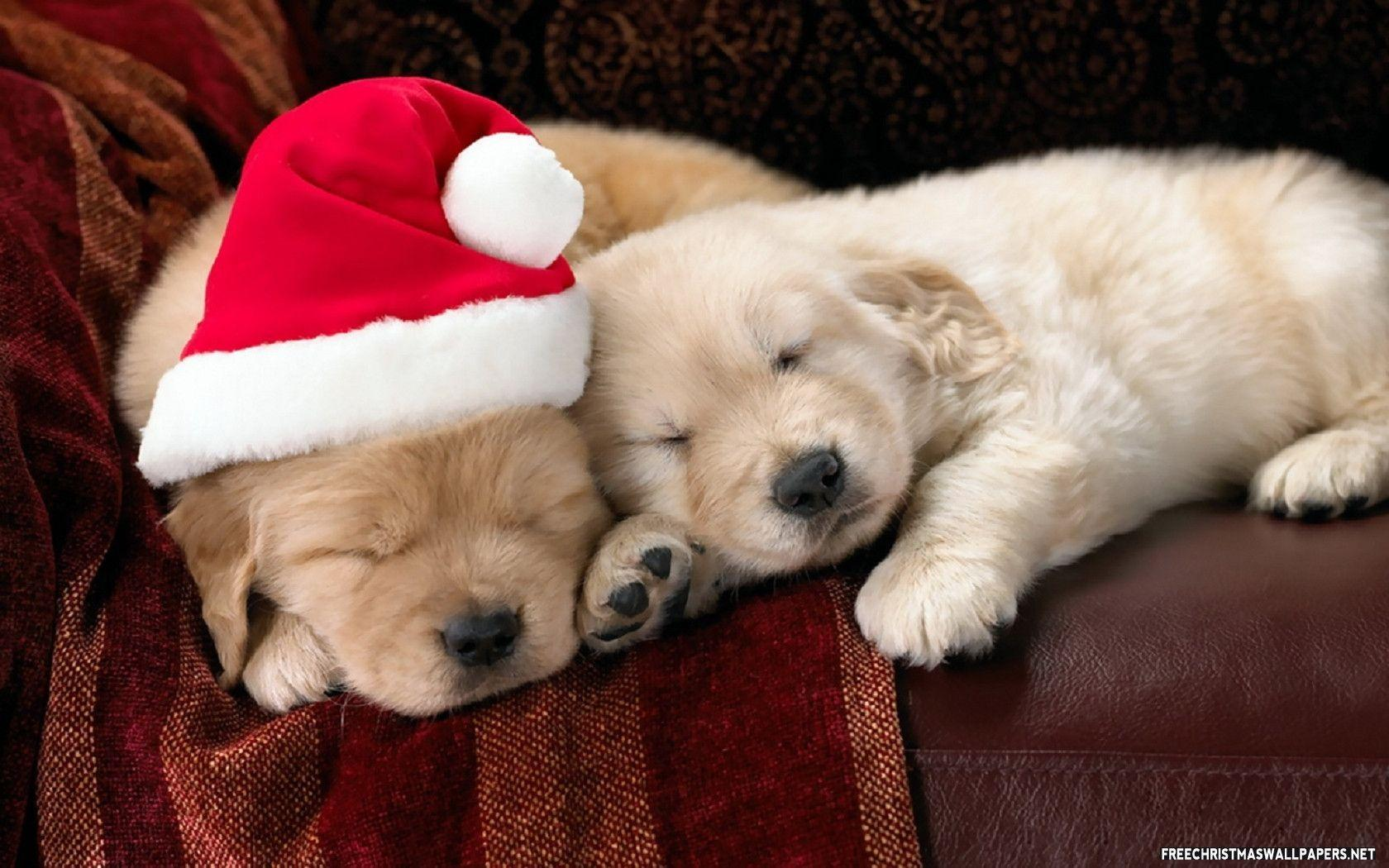 25  Adorable Cute Christmas Puppies