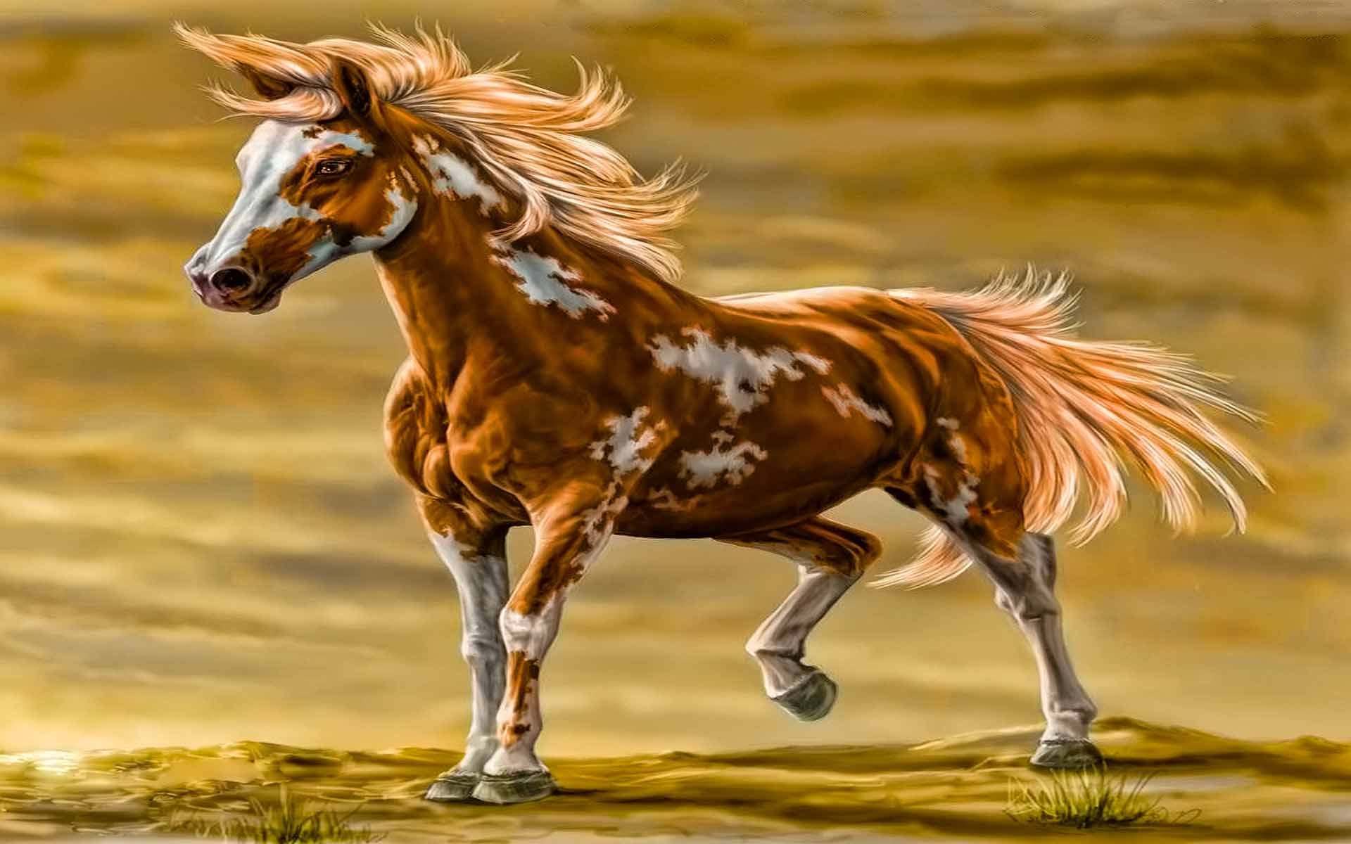 Paint Horse Wallpapers - Wallpaper Cave