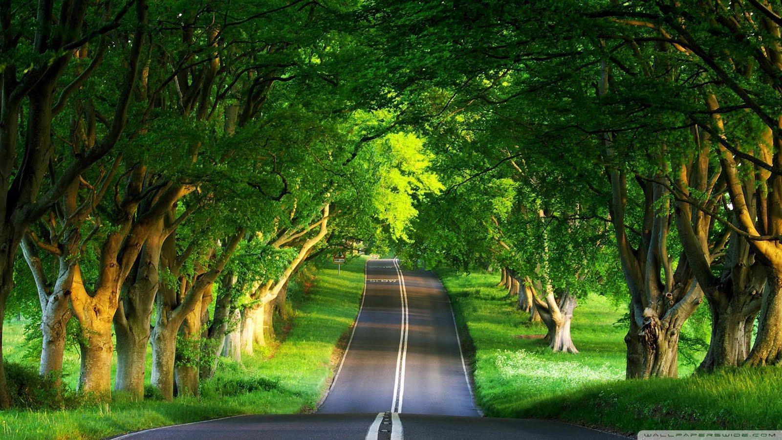 اروع صور من الطبيعة Best Nature Wallpapers 61NBEur