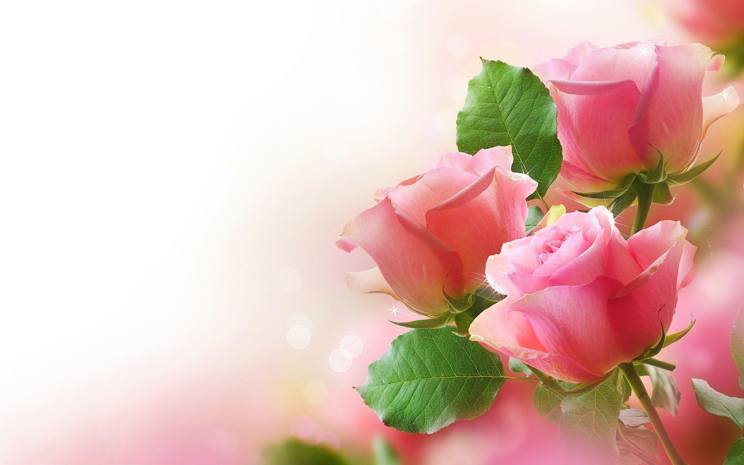 Roses Wallpapers For Desktop Wallpaper Cave