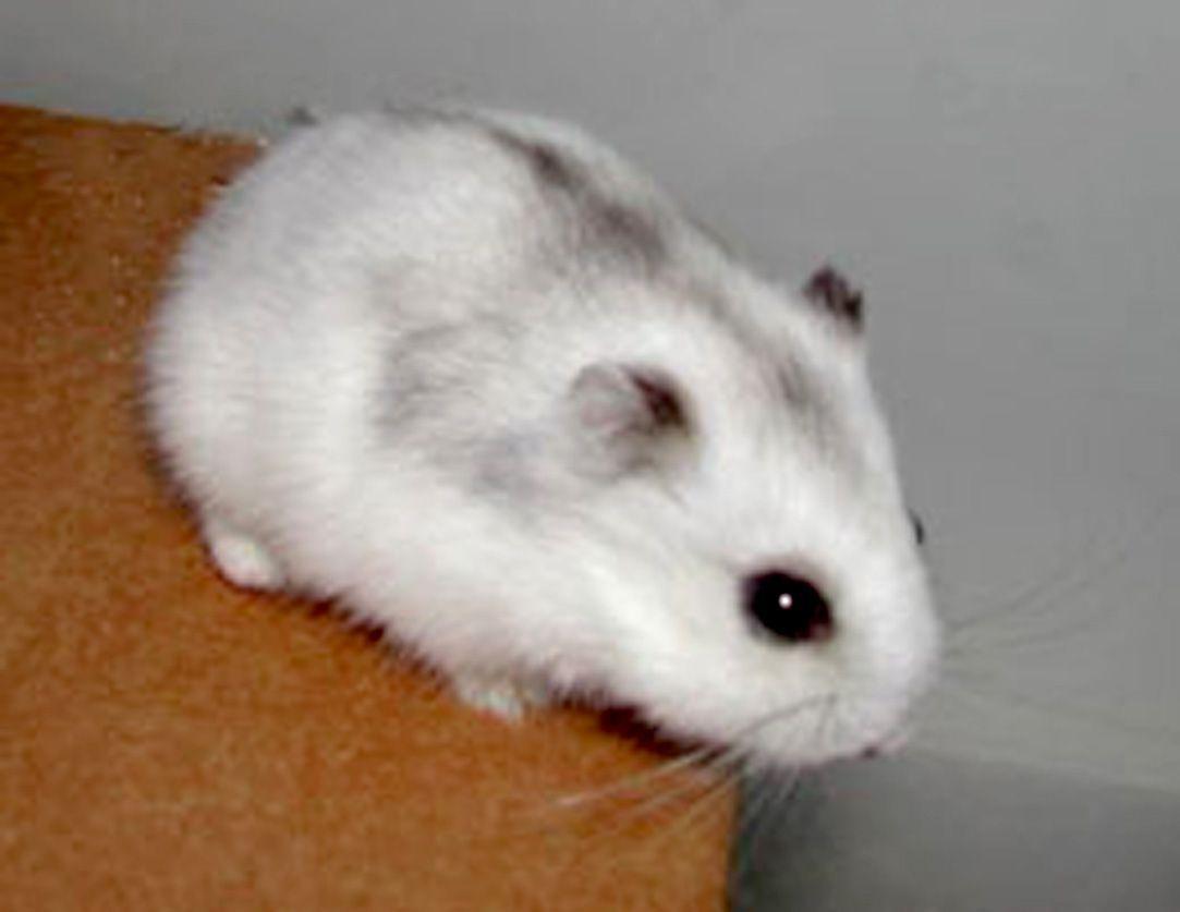 Her hamster.com