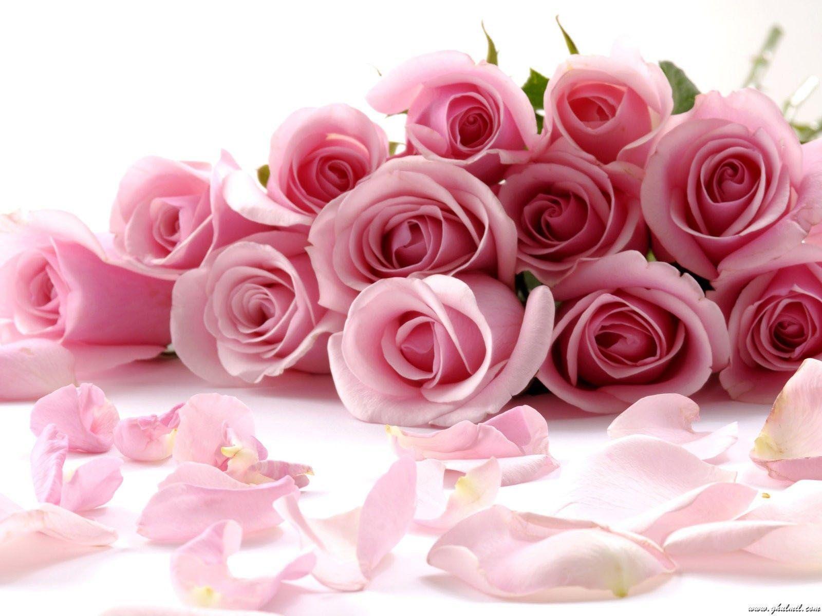 Red rose desktop wallpapers wallpaper cave very beautiful pink red roses wallpaper for desktops free hd izmirmasajfo
