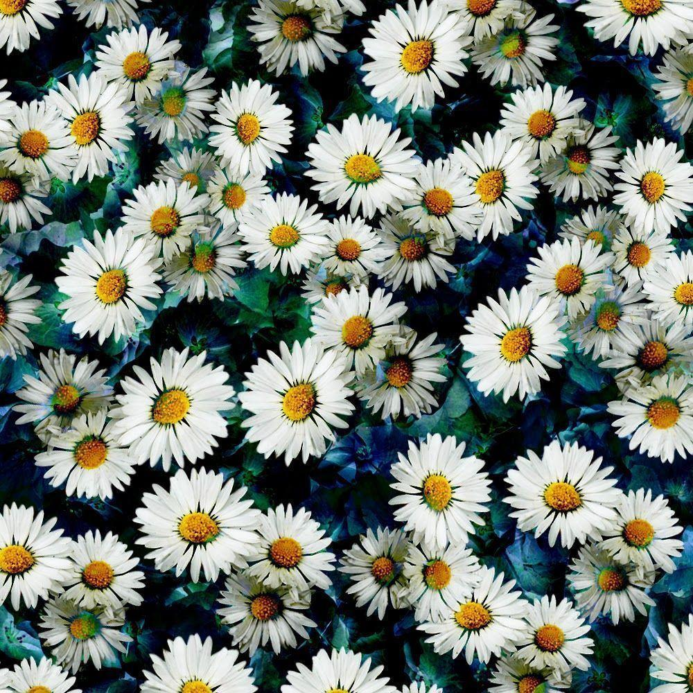 Daisy pattern wallpaper - photo#39