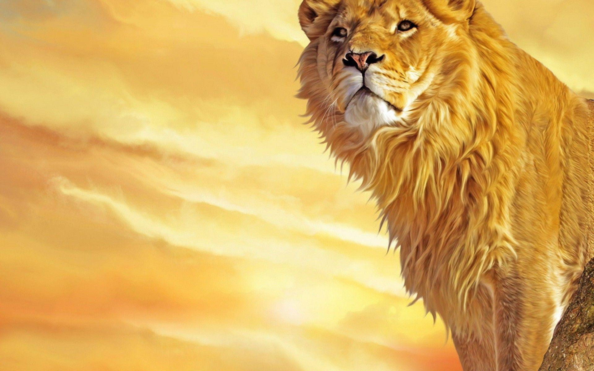 lion hd wallpapers 1024x768 - photo #4