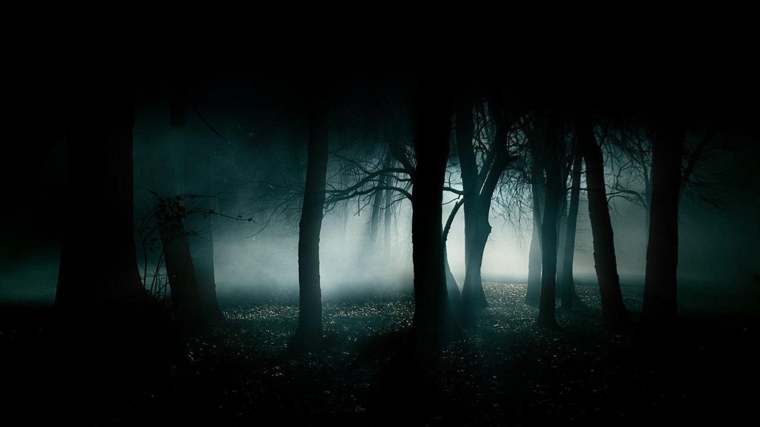 Wallpapers For > Dark Night Forest Background