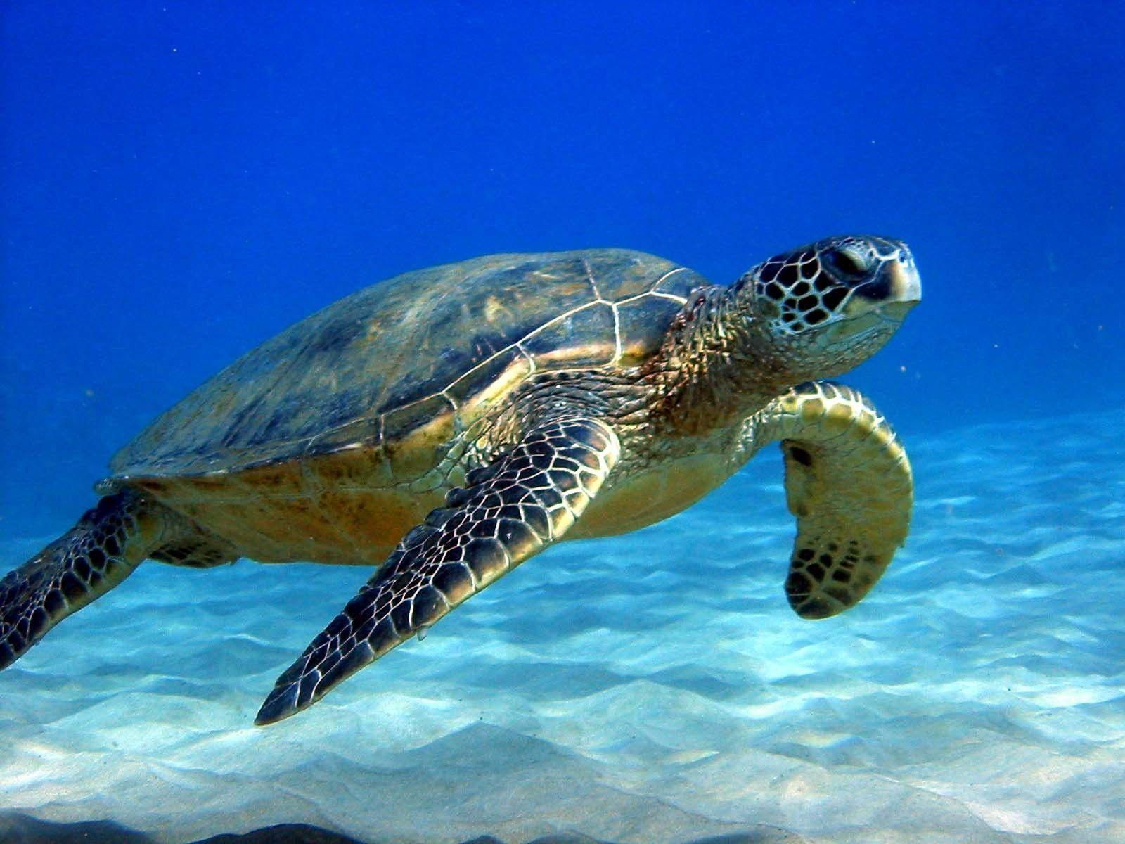 FunMozar – Sea Turtle