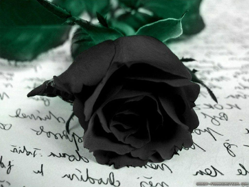 Black Rose Backgrounds HD Wallpapers Download HD Wallpapers