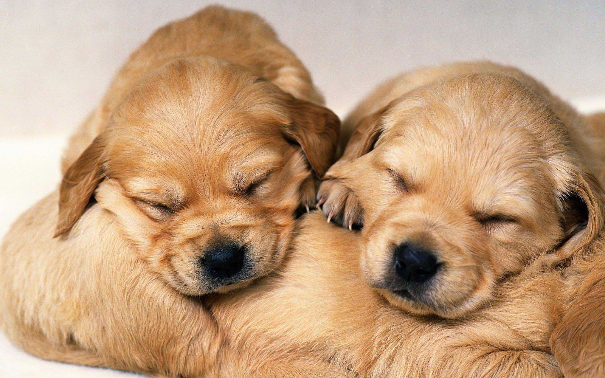 Cute Puppy Wallpapers Wallpaper Cave